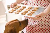 Dog Food - Hundekekse in Knochenform