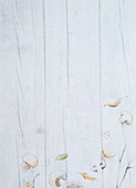 Pictures of mushrooms on a white wooden surface