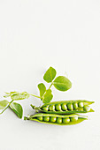 Two fresh pea pods against a white background