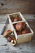 Fresh wild mushrooms in a wooden basket