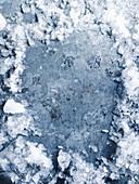 Zerstoßenes Eis auf Metallplatte
