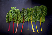 Rainbow Chard on Black Backdrop