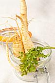Organic Hamburg parsley in a pickling jar