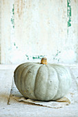 A Crown Prince pumpkin against a white wooden background