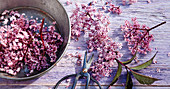 An arrangement of pink elderflowers