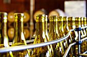 Leere Weinflaschen in der Abfüllanlage