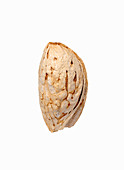 A almond from Afghanistan