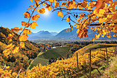 A view of St. Valentine's church from the vineyards, Merano, Vinschgau, South Tyrol, Italy