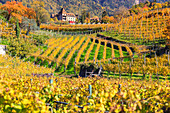 Labers castle, surrounded by vineyards, Merano, Vinschgau, South Tyrol, Italy