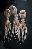 Three fresh octopus