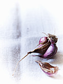 Purple garlic on a linen cloth