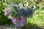 Lobelia erinus Lobelix 'Blue White Eye' ( Männertreu ) und Pelargonium