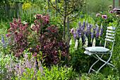 Sitzplatz im Garten neben Weigela florida 'Purpurea' ( Rotblättriger Weigelie