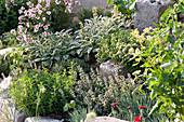 Kräuterbeet mit Einfassung aus Natursteinen : Salvia officinalis 'Rotmühle'
