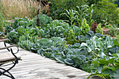 Gemüsebeet mit verschiedenen Kohl-Sorten