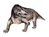 Cynognathus, illustration