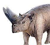 Arsinoitherium, illustration