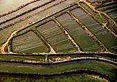Aquaculture pens, Algarve, Portugal, aerial photograph