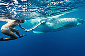 Swimming with a humpback whale