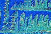 Cisplatin anti cancer drug, polarised light micrograph