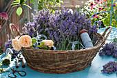 Korb mit frisch geschnittenen Blüten von  Lavendel und Rosen