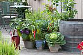 Brassica ( Wirsing, Wirsingkohl ), Capsicum annuum ( Paprika ), Solanum