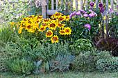 Beet mit Kräutern und Sommerblumen am Zaun :