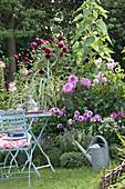 Tisch und Stühle am Beet mit Dahlia ( Dahlien ), Arundo donax 'Variegata'