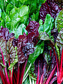 Fresh chard (seen from above)