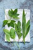 Wild herbs – dandelion, ground-elder, ribwort plantain and sorrel