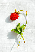 A close-up of a single ripe wild strawberry with a leaf on a piece of linen