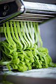 Homemade wild garlic pasta in a pasta machine