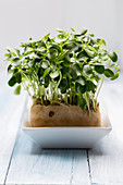 Cress in a white bowl