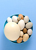 Various eggs in a blue bowl against a blue background (top view)
