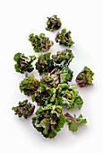 Flower sprout (a cross between a Brussels sprout and green kale)