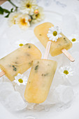 Lemon and honey ice lollies