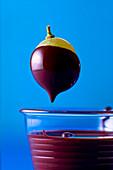 A grape dipped in chocolate