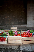 Tomatoes and radishes in vegetable boxes