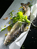 Fresh trout with herbs, salt and oil on paper