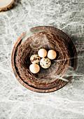 Verschiedene Eier im Nest