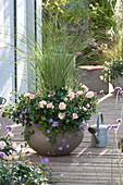 Graue Schale mit Rosa 'Garden of Roses'
