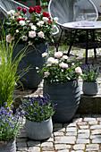 Rosen - Lavendel - Arrangement