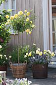 Terrasse mit gelben Rosen