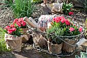 Beet mit Nelken, Kräutern und Salat bepflanzen :