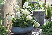 Schale mit Hydrangea paniculata 'Polar Bear' ( Rispenhortensie )