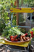 Tablett mit frisch geerntetem Gemüse auf Gartenstuhl