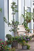 Terrasse mit Obstgehölzen und Gemüse
