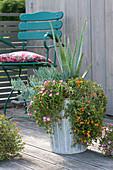 Mediterran bepflanzter Kübel mit Sukkulenten