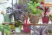 Terrasse mit Blattschmuck - Gemüse im Topf