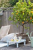 Balkon mit Calamondin-Orange im Korb